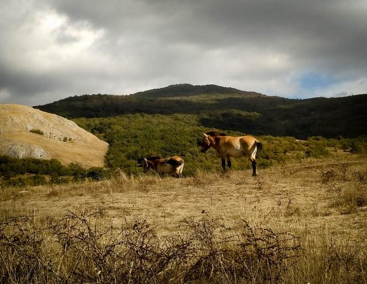 Ruta por Palencia - Caballos Bison Bonasus