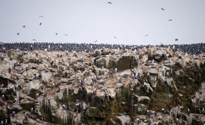 Ruta por Peru - Islas Ballestas