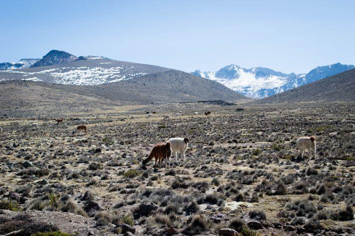 Ruta por Peru - Pampa del Arriero