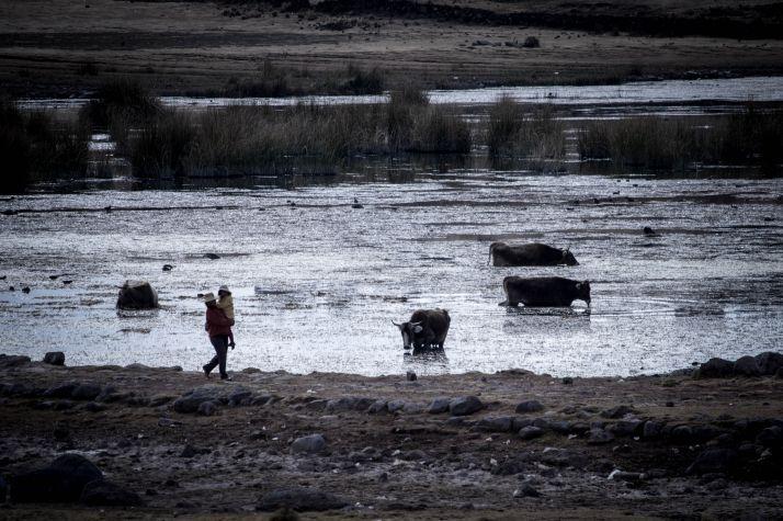 Ruta por Peru - Sillustani vacas